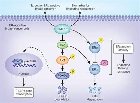 Progesterone receptor positive breast cancer jpg 600x443