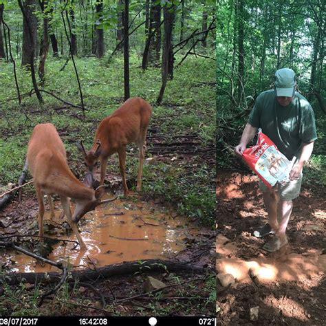 mineral licks for deer jpg 1280x1280